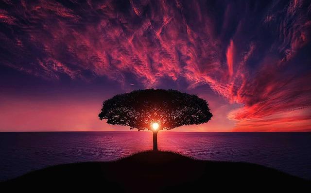 そして僕は木になり全てとの縁を知った